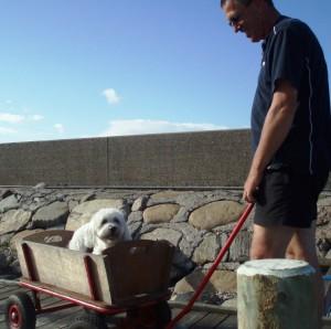 Max i trækvogn